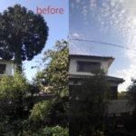 香川県、特殊伐採、庭木